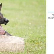 לימוד אילוף כלבים במרכז אופק