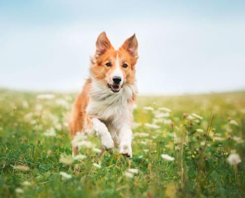 פנסיון כלבים מרכז אופק