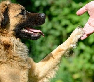 כלבנות טיפולית מרכז אופק