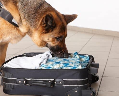 לימודי אילוף כלבים מרכז אופק
