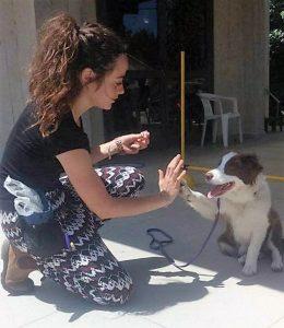 כלבנות טיפולית מרכז אופק להכשרת מטפלים ומדריכים
