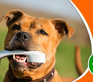 לימודי אילוף כלבים