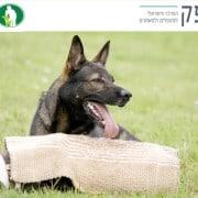כלבי עבודה מרכז אופק