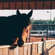 קורס רכיבה על סוסים מרכז אופק
