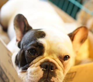 מעבר דירה עם כלב