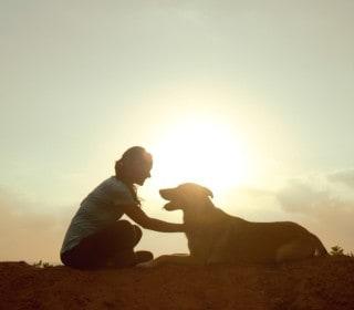 לימודי אילוף כלבים מרכז אופק להכשרת מטפלים ומאמנים