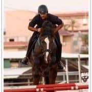 קורס מדריכי רכיבה על סוסים - סגנון אולמפי\אינגליש