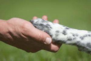 טיפול בעזרת כלבים