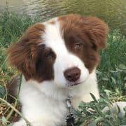 בחירת כלב טיפולי