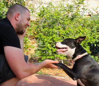 אילוף כלבים גישה חיובית FORCE FREE מרכז אופק