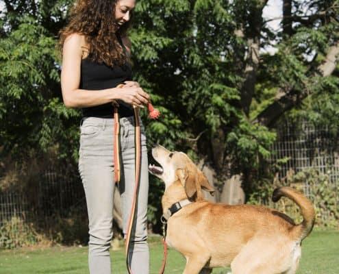 קורס מאלף כלבים מבוסס חיזוקים חיוביים