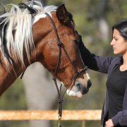 סוסים גוף ונפש