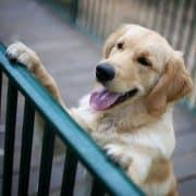 אילוף כלבים חיזוקים חיוביים מרכז אופק