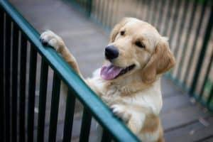 קורס אילוף כלבים חיזוקים חיוביים מרכז אופק