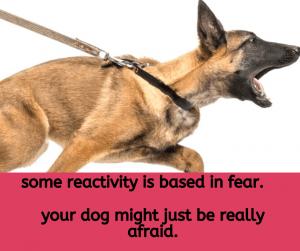 כלבים ריאקטיבים מרכז אופק