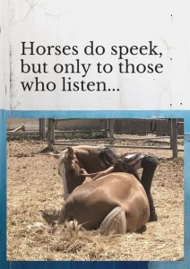 סיוע בעזרת סוסים מהקרקע מרכז אופק