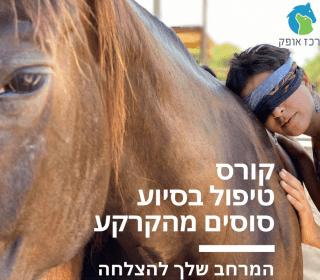קורס טיפול בסיוע סוסים בעבודה מהקרקע