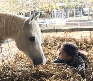 מרכז אופק טיפול וסיוע בעזרת סוסים מהקרקע
