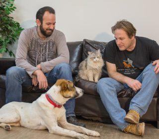 עבודה עם כלבים
