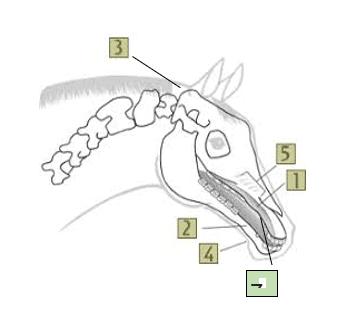 קורס מדריכי רכיבה על סוסים אופק
