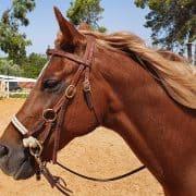 קורס מדריכי רכיבה על סוסים