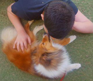 כלבנות טיפולית אופק