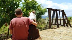קורס טיפול בעזרת כלבים אופק