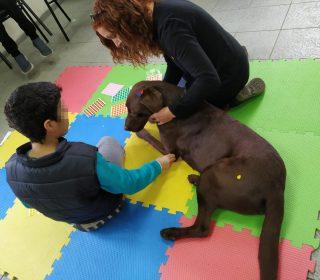 כלבנות טיפולית - מדריך כלבנות טיפולית