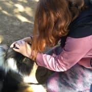 טיפול בעזרת כלבים מרכז אופק