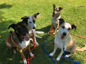 טיפול בסיוע כלבים כלבנות טיפולית