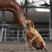טיפול בעזרת בעלי חיים - כלבנות טיפולית | רכיבה טיפולית